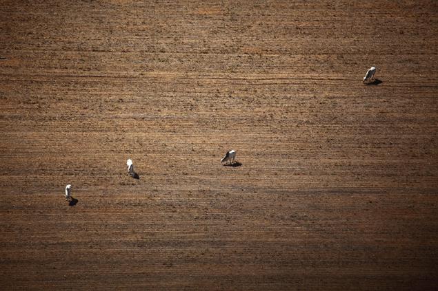 Pastagem em área desmatada da Amazônia em Peixoto de Azevedo (MT) (Rodrigo Baleia/Folhapress)